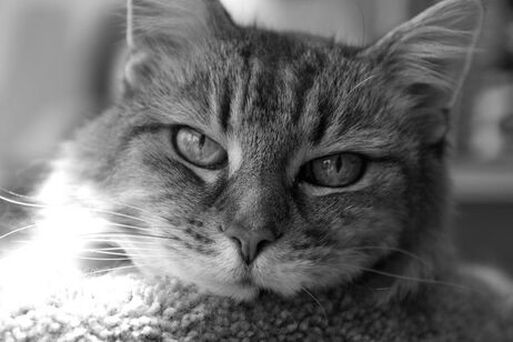 Close up of an older cat