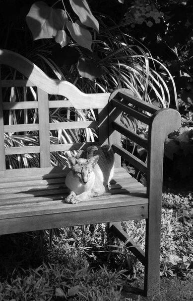 A picture of a healthy cat resting on a bench