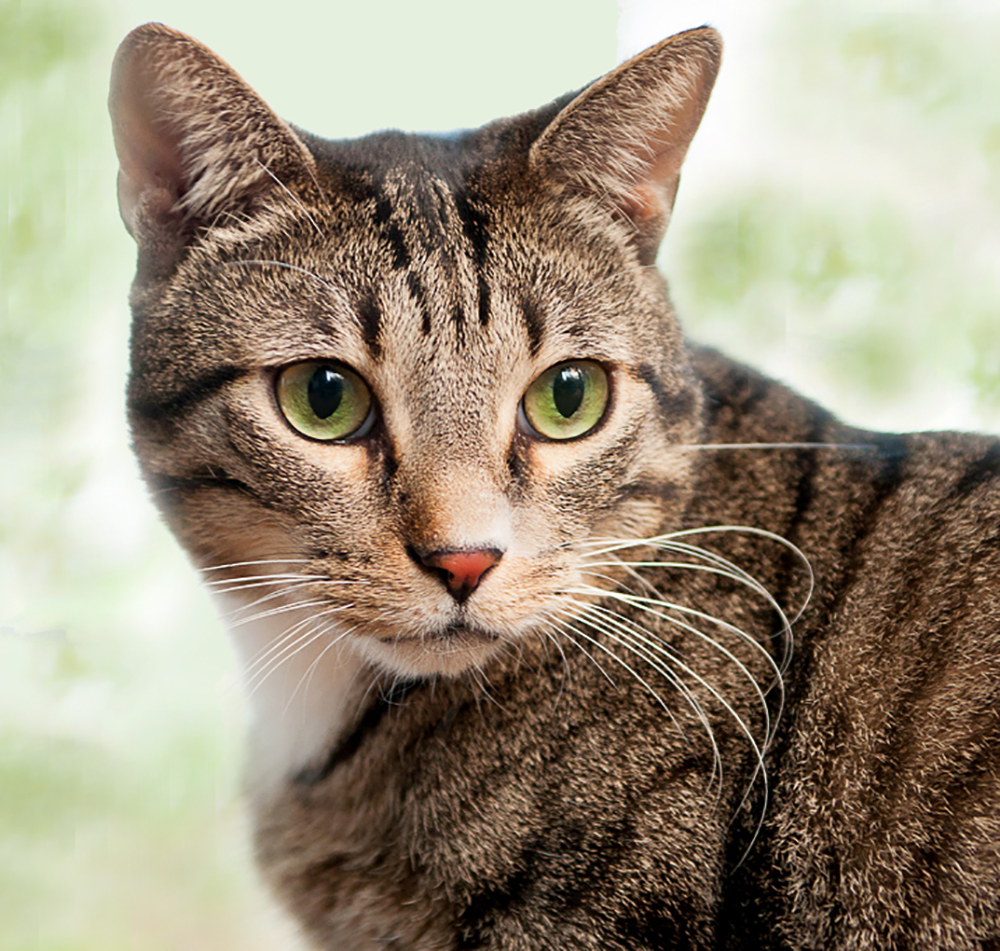 picture of a beautiful healthy cat