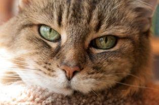 petsage cat
