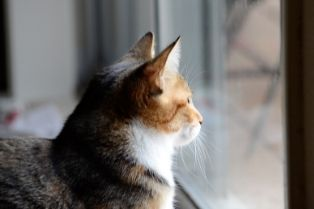 A picture of a cat looking out a window