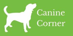 canine corner icon