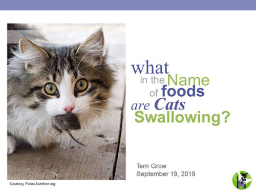 What in the Name of Foods are Cats Swallowing? Webinar