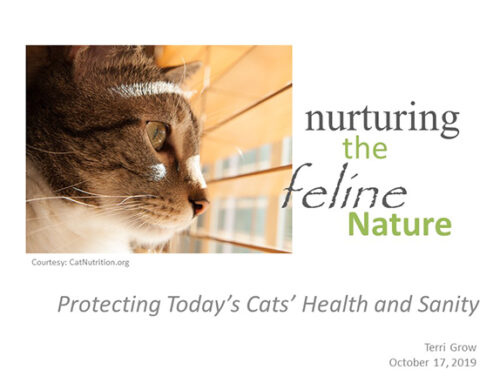 Nurturing the Feline Nature Webinar