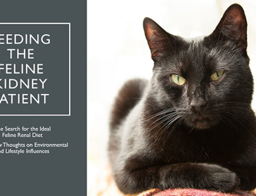 Feeding the Feline Kidney Patient Webinar