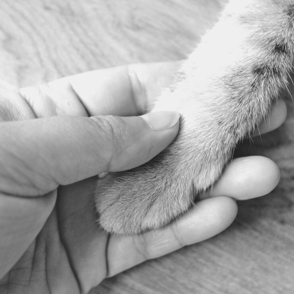 A picture of a cat paw and hand